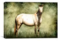 Connamara Horse, Canvas Print