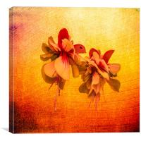 Little Flower, Canvas Print