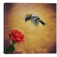Chaffinch and the Rose, Canvas Print