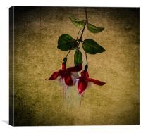 Belle petite fleur, Canvas Print
