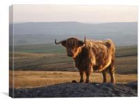 Highland Hairy, Canvas Print