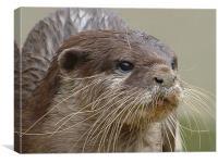 Otter, Canvas Print