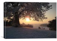 Evening Snow, Canvas Print
