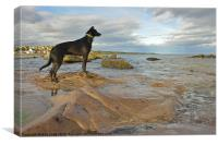 Lurcher on the Rocks, Canvas Print
