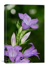 Bellflower, Canvas Print