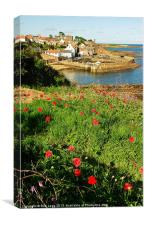 Crail Poppies, Canvas Print