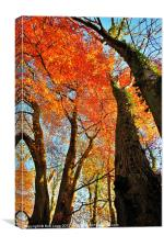 Autumn Trees, Canvas Print