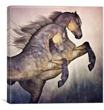 Two Stallions, Canvas Print