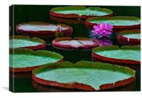 Lilly Pads on Water, Canvas Print
