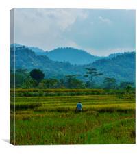Rice Terrace, Canvas Print
