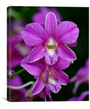 Purple Orchids in Bloom, Canvas Print