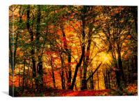 Autumn Forest, Canvas Print