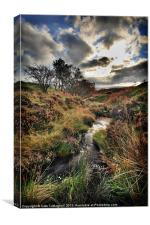 Autumn Moor, Canvas Print