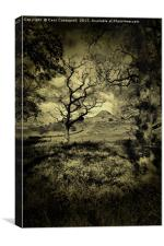 Spring's Fading Light, Canvas Print
