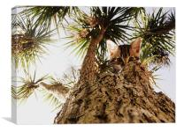 Kitty in a palm tree, Canvas Print
