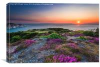 Headon Warren Sunset, Canvas Print