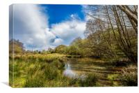 Water Meadow, Canvas Print