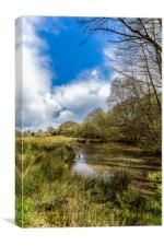 Isle Of Wight Water Meadow, Canvas Print
