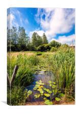 Brading Marsh Summer Water Meadow, Canvas Print