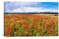 Isle Of Wight Poppy Field, Canvas Print