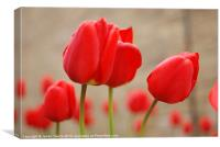Raindrops And Tulips, Canvas Print