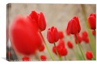 Raindrops and Tulips 2, Canvas Print