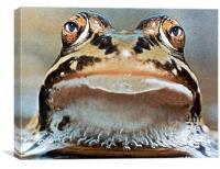 Mr. Frogger, Canvas Print