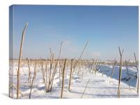 twigs in a field of snow, Canvas Print