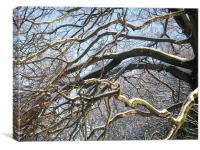 snow on a tree and a robin red breast., Canvas Print