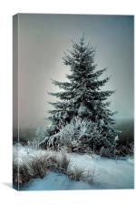 Majestic Winter, Canvas Print