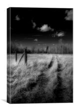 Road Less Travelled, Canvas Print