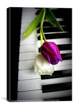2 Tulips On Piano Keys, Canvas Print