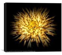 Illuminate, Canvas Print