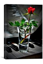 Single Red Minature Rose, Canvas Print
