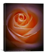 Simply Rose, Canvas Print