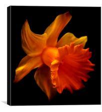 Daffodil 2, Canvas Print