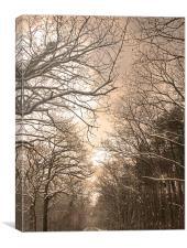 Blean Woods snowscene, Canterbury, Canvas Print