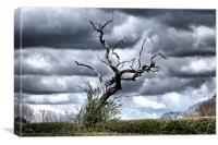 Petrified tree in Cheshire countryside., Canvas Print