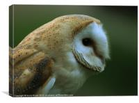 Ollie Owl, Canvas Print