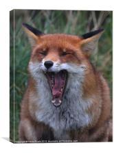 The Yawn, Canvas Print