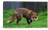 Cunning Fox, Canvas Print