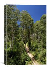 Forest Walk, Canvas Print