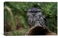Tawny Frogmouth, Canvas Print