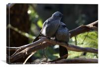 Apostle Birds In Love, Canvas Print