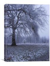 Winter Parkland, Canvas Print