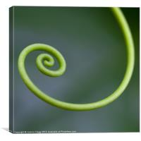 Green Curl, Canvas Print