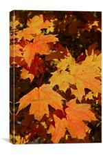 Maple Leaf Forever, Canvas Print