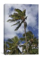 The Palms, Canvas Print