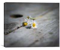 Daisies left at the table...., Canvas Print