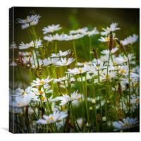 Daisies by the Lake, Canvas Print